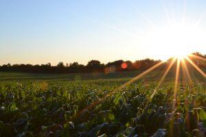 Le marché du bio en nette progression